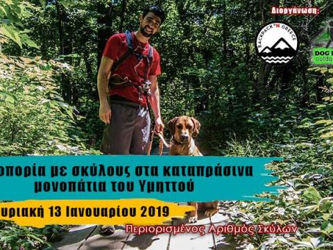 Hiking With Dogs In Hymettus Green Paths