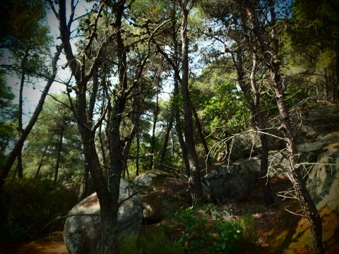 green oliver hiking trekking chalkidiki sithonia greece χαλκιδικη πεζοπορια ελλαδα3