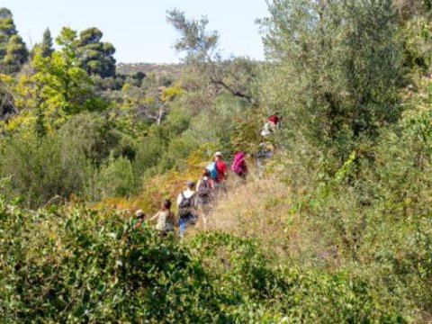 green oliver hiking trekking neos marmaras chalkidiki greece πεζοπορια χαλκιδικι ελλαδα 4