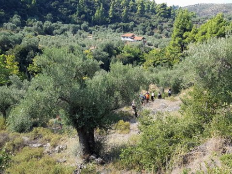 green oliver hiking trekking neos marmaras chalkidiki greece πεζοπορια χαλκιδικι ελλαδα 1