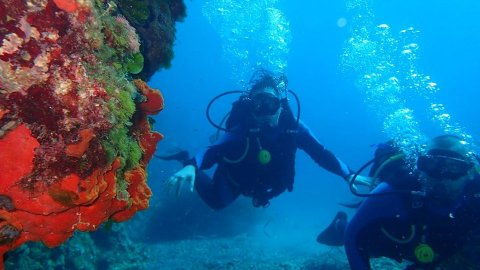 Discover Scuba Diving Alonissos