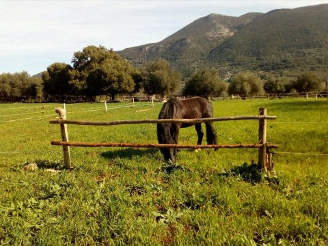 Horse Riding Kefalonia Countryside ιππασια αλογα Greece.jpg12