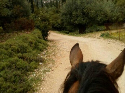 Horse Riding Kefalonia Countryside ιππασια αλογα Greece.jpg8