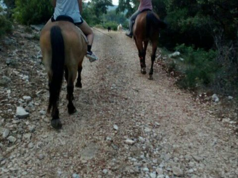 Horse Riding Kefalonia Countryside ιππασια αλογα Greece.jpg5