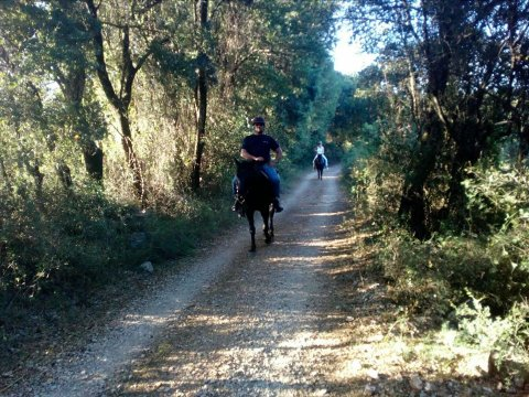 Horse Riding Kefalonia Countryside ιππασια αλογα Greece