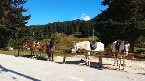 Horse riding pertouli Ιππασια Greece extreme αλογα (2)