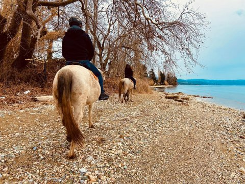 horse-riding-center-pelion-greece-ιππασια-αλογα-πηλιο.jpg7