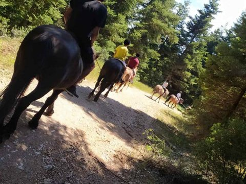 mainalo-camp-hiking-horse-riding-greece-πεζοπορια-ιππασια.jpg2